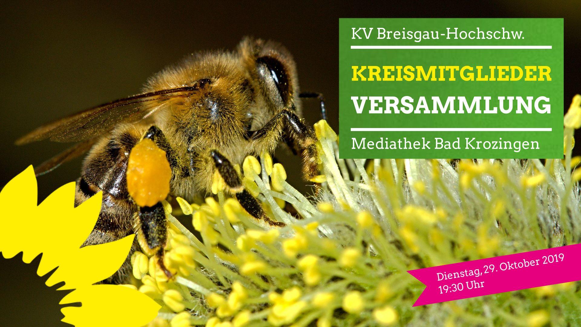 """Kreismitgliederversammlung zum Volksbegehren """"Rettet die Bienen"""""""