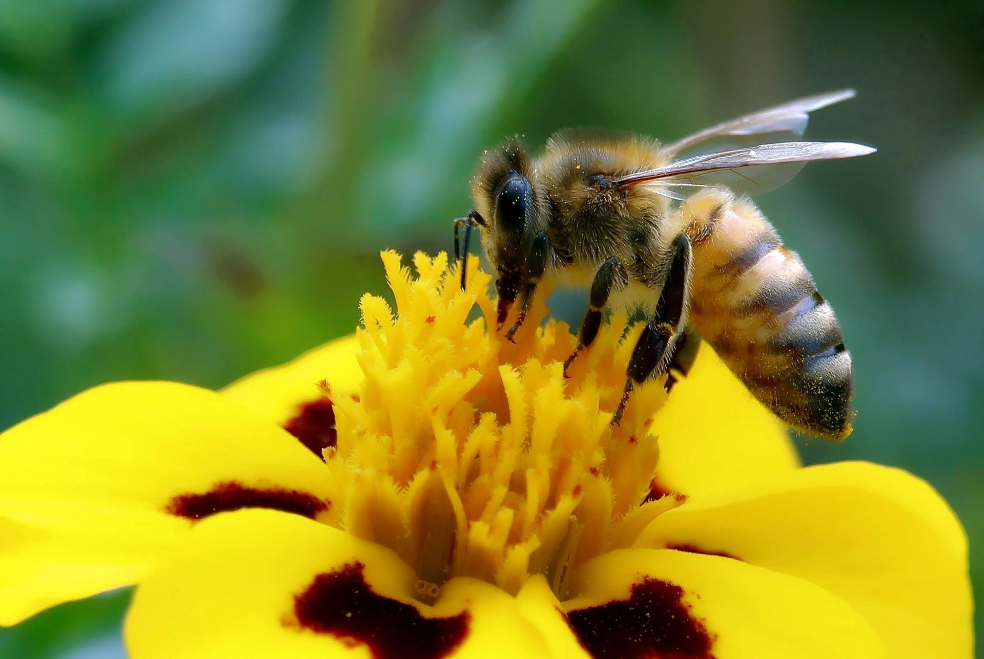 Gesetz für mehr Artenvielfalt ist fast am Ziel